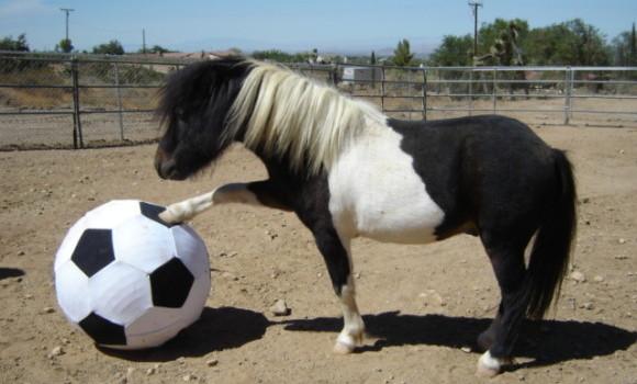 hest_fotball